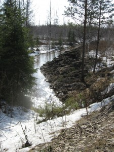 Kuva 1 Petäisjärven maastossa tehtyä ojitusta